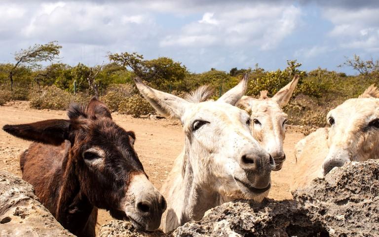 Tips voor een vakantie Bonaire