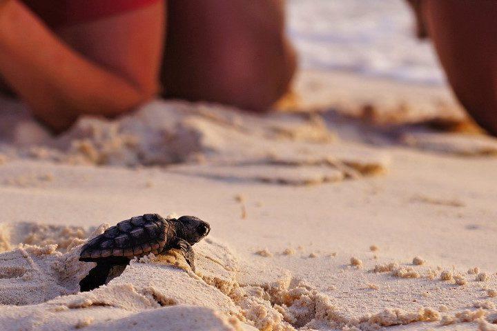 Vakantie Bonaire