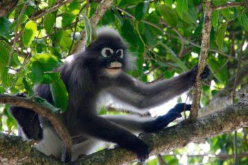 16-daagse rondreis Suriname