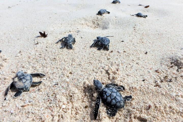 Zeeschildpadden op Bonaire