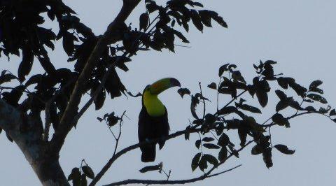 Wat moet je gezien hebben in Belize?