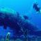 Aruba duiken