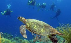 Coral Divers 3 Duiken