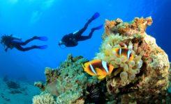 duiken-curacao-clown-fish