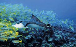 Saba duiken